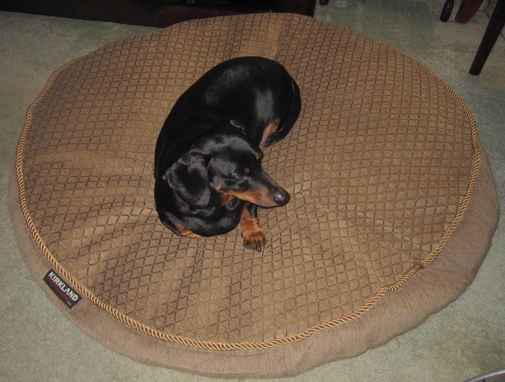 Costco Dog Bed Sale