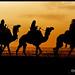 Camels Caravan !