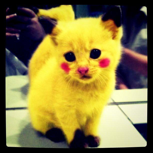 like Cat pikachu painted