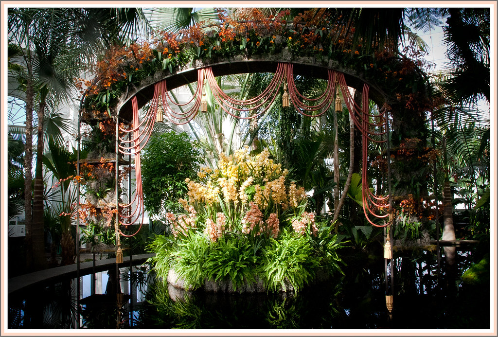 New Botanical Garden Orchid Show March 19 2011 Photo Gem Flickr