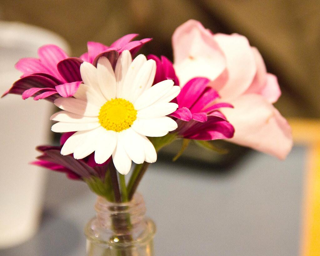 flowers for algernon Henry Ngo