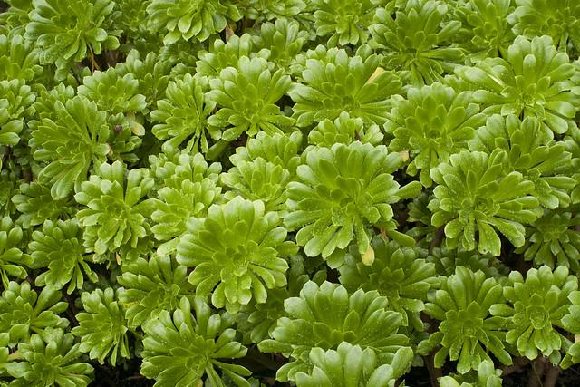 jardim plantas suculentas : Jardim de plantas suculentas Flickr - Photo Sharing!