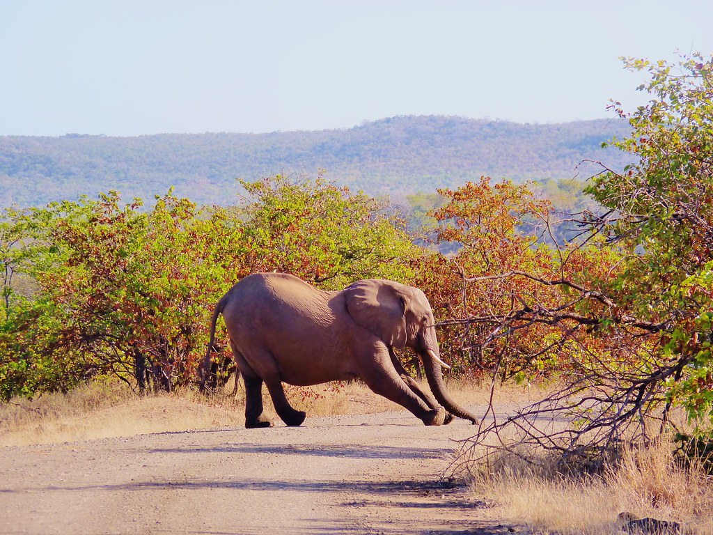 Image result for stretching elephant