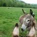The Daily Donkey 32