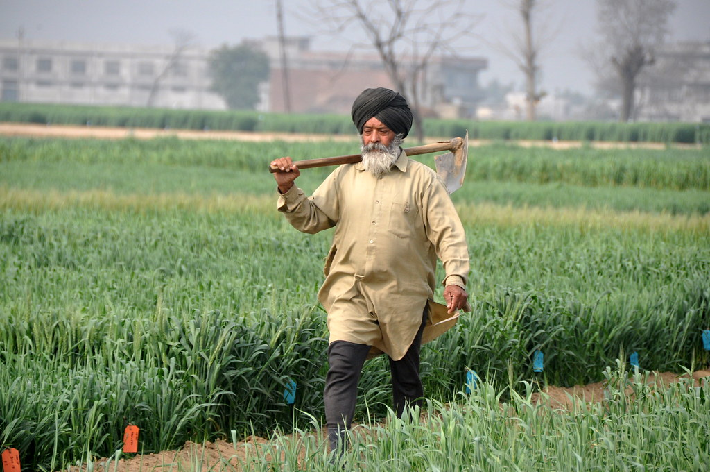Ludhiana Punjab India At The Punjab Agricultural