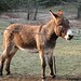 The Daily Donkey 36 - Dan Scratches an Itch