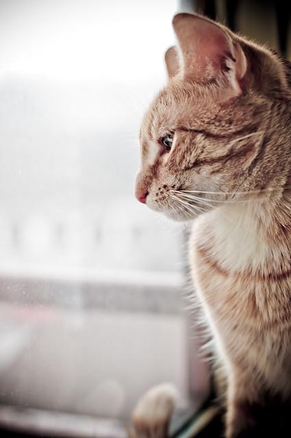Cat Long Upright Ears Head Silhouette