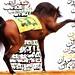 مروان الشقب  اجمل حصان في العالم