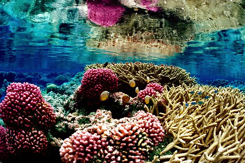 Coral Reef at Palmyra Atoll National Wildlife Refuge | by USFWS Pacific