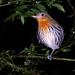 Roosting bird