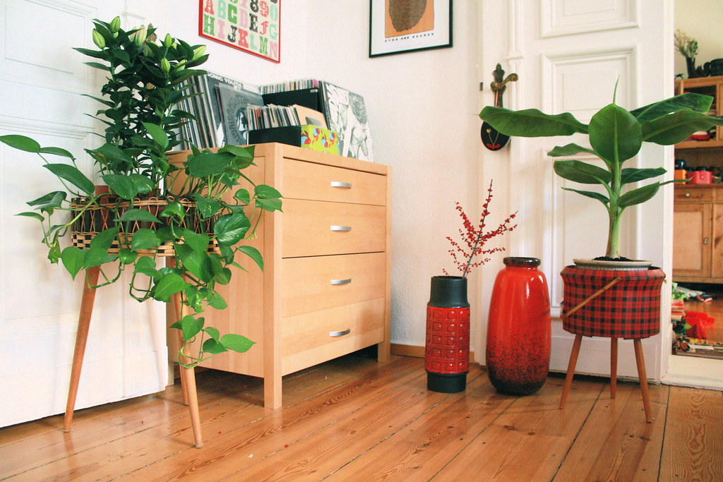 New Plants Around The Living Room New Blog Post Super