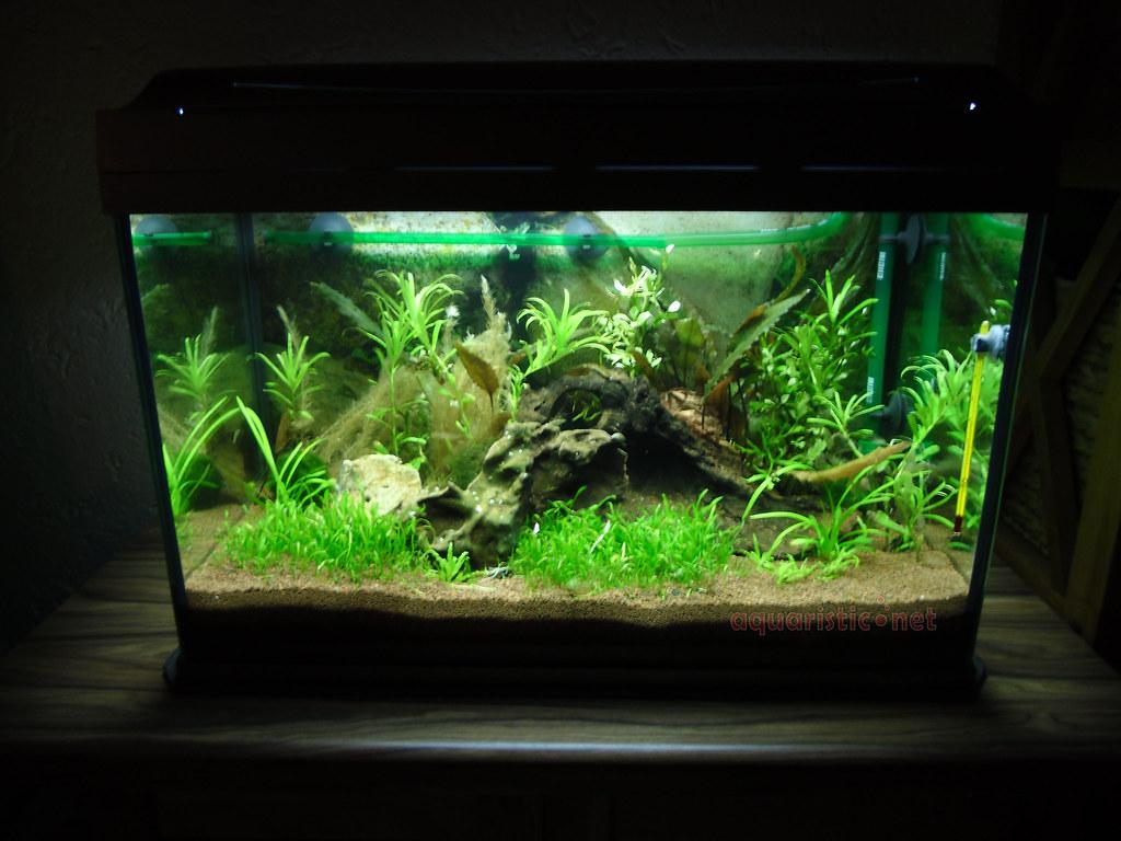 60 l aquarium andrea r aus deutschland schickt uns ein. Black Bedroom Furniture Sets. Home Design Ideas