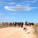 'A Stampede', Argentina, Chascomus, Country Road