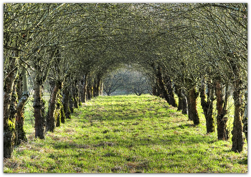 Avenue of Apple Trees | by Habub3