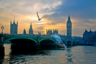 Gulls and Houses of Parliament at Sunset | by briburt