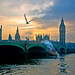 Gulls and Houses of Parliament at Sunset