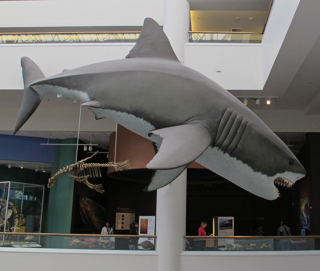 San Diego Natural History Museum  S
