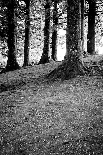 Trees and Forest - Black and White - Landscape Photography ...