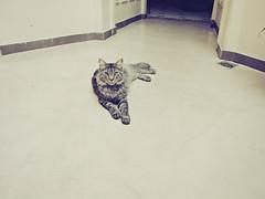 the hostel cat