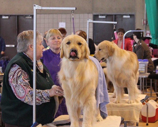 Rcc dog show flickr photo sharing for Rcc home show