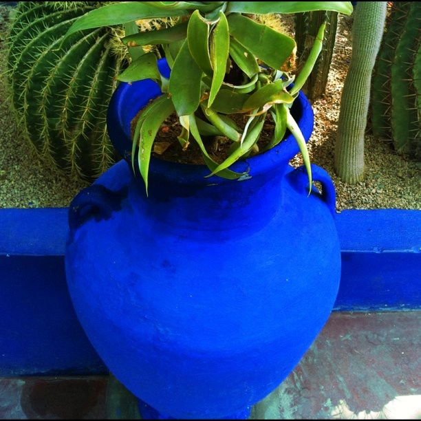 pot bleu majorelle blue igersfrance nofilter photod flickr. Black Bedroom Furniture Sets. Home Design Ideas