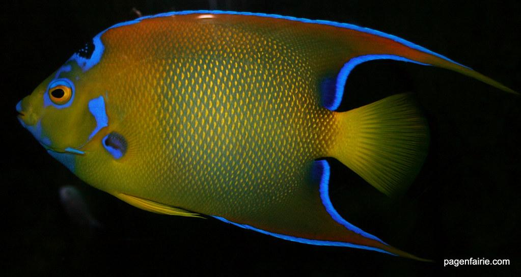 Bright Coloured Fish Taken At Blue Reef Aquarium