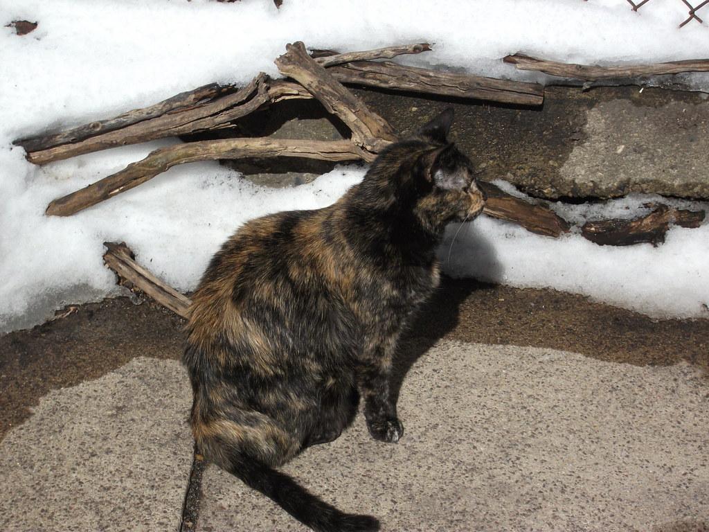 Cat Falling Snow Gif