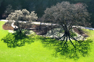 Extreme Tree Shadow on Green | by Batikart