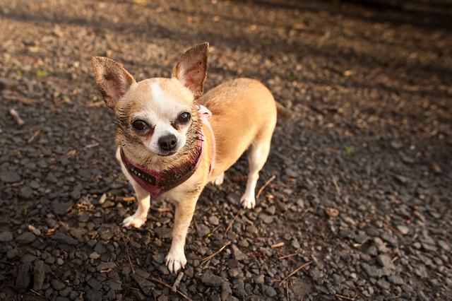 birth-month-dog-breed