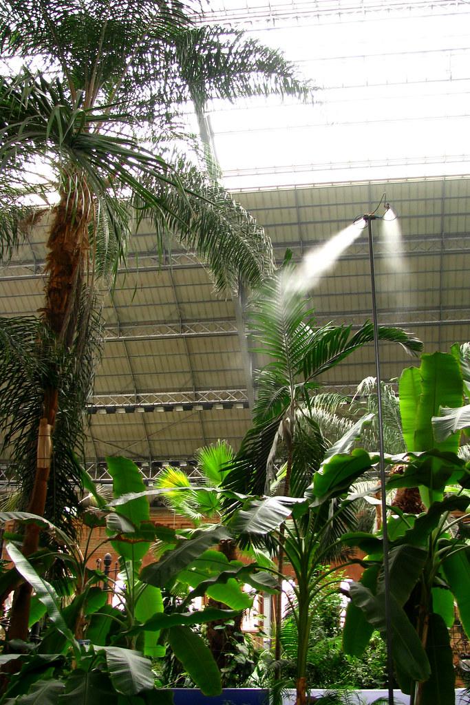 Jardin tropical de atocha 12 madrid jard n tropical de flickr - Jardin tropical atocha ...