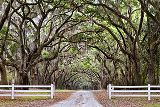 Wormsloe Plantation - Coolest driveway in the world (Spanish moss and Oak trees) | by ryotnlpm