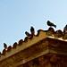 Park Guëll pigeons