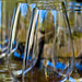 Wine Glass Forest at Donato Enoteca