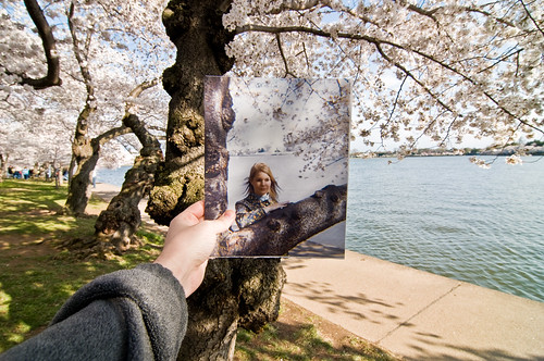 11-04-01 - Cherry Blossoms - Flashback of Mom | by mosley.brian