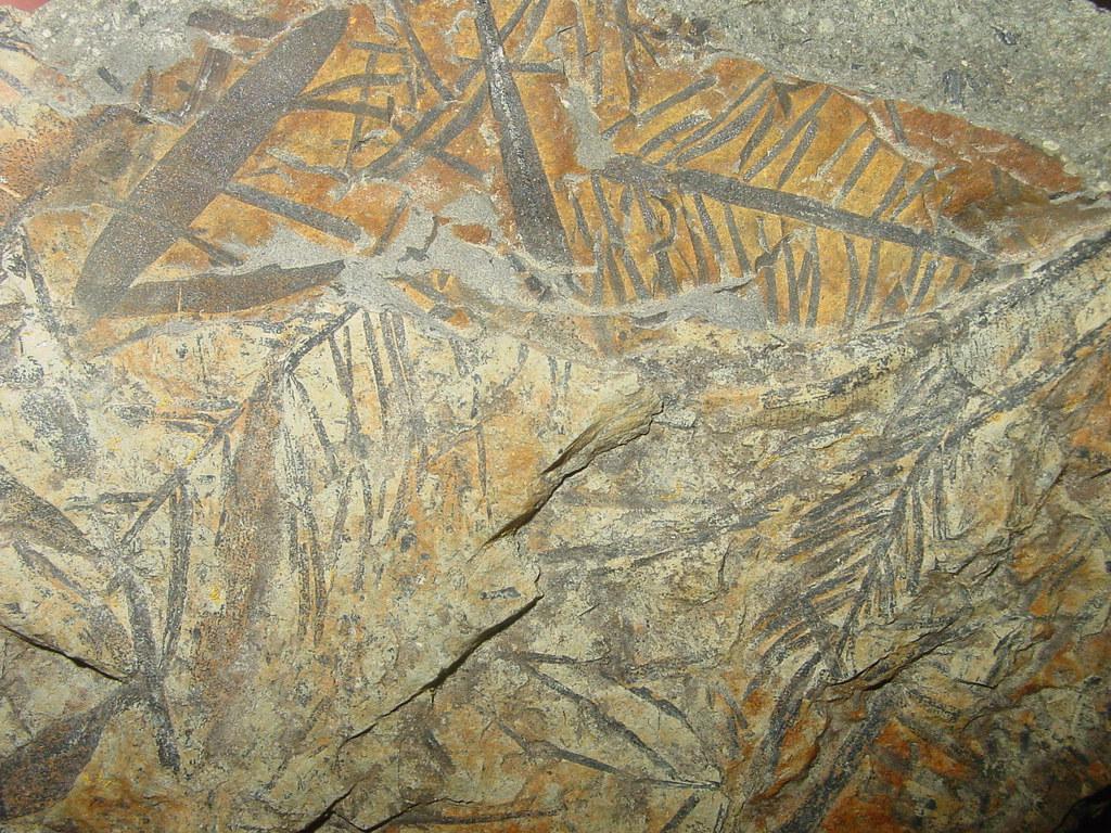 Jurassic Plant Fossils