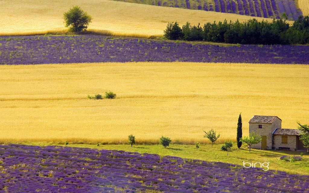 lavender fields near sault provence alpes cote d 39 azur fr flickr. Black Bedroom Furniture Sets. Home Design Ideas
