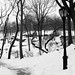 Central Park, in winter