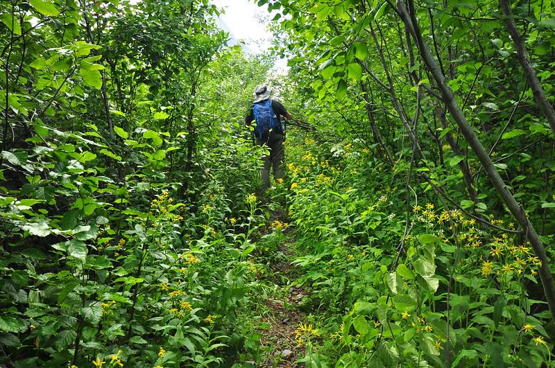Bugaboo Pass Hike