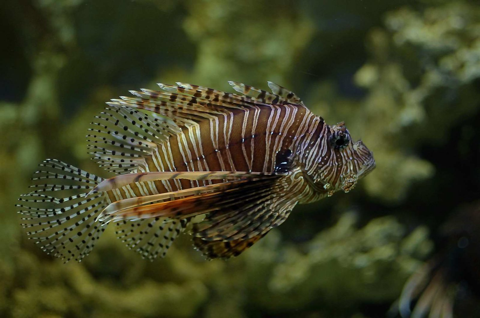 野柳海洋世界/海洋生物展示館