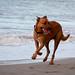 Dog on Kewarra Beach
