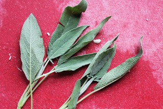 fresh sage leaves | by Kim | Affairs of Living