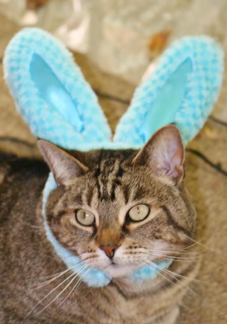 Happy Easter Little Critter Little Critter LookLook