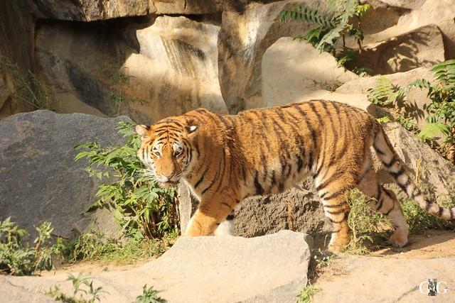 Tierpark Friedrichsfelde 25.09.16100