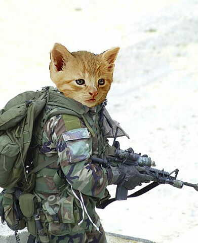army cat | a.gos | flickr