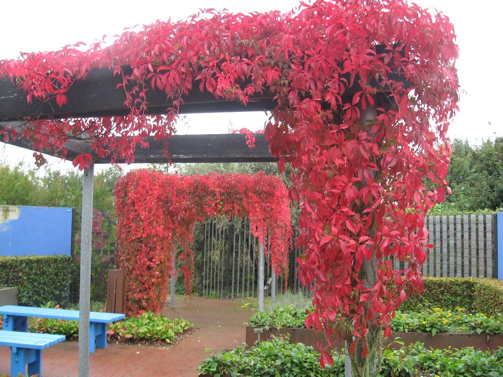 Schaduw door pergola met klimplant tuinen van appeltern 1 flickr - Toren voor pergola ...