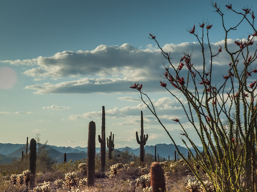 Arizona desert | by Franco Folini
