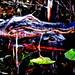 Okeefenokee-Gators