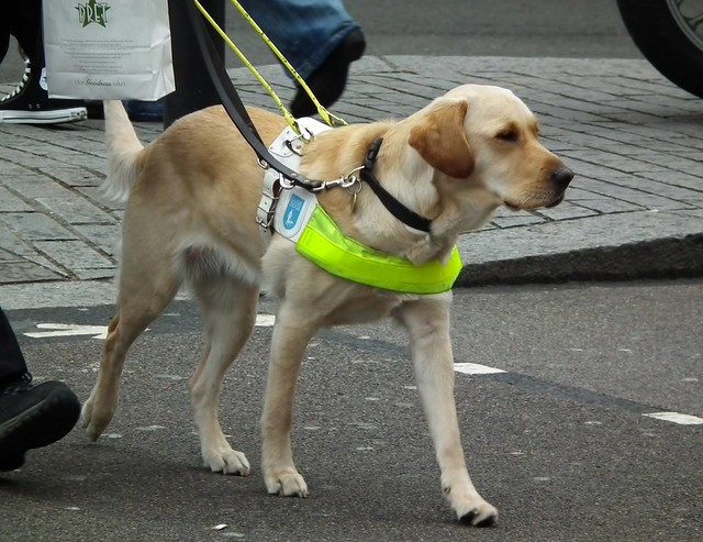 Image Result For Dog Training Harness