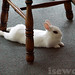 yuki as superbunny under a chair cute rabbit by isewcute