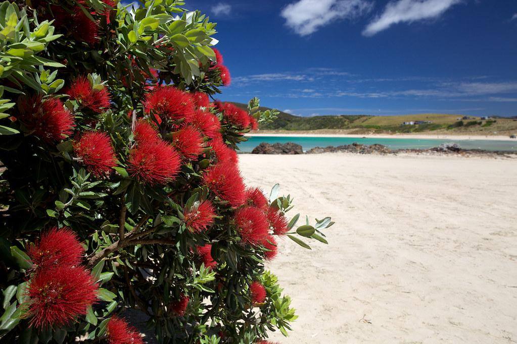 New Zealand's Christmas Tree